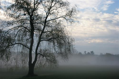 willow fog